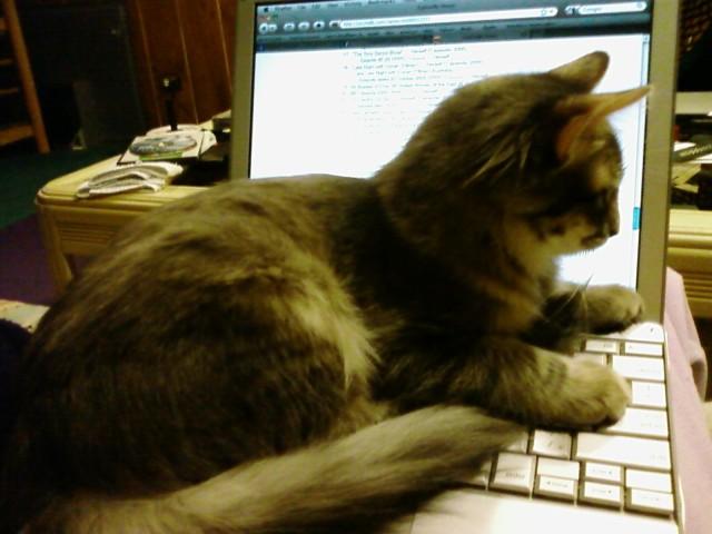 Kali_Nearly_Grown_Cats_Like_Computers