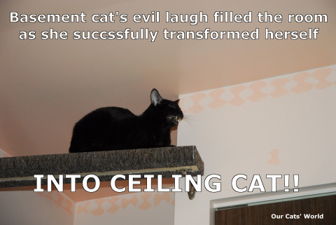 Basement_Cat_Ceiling_Cat