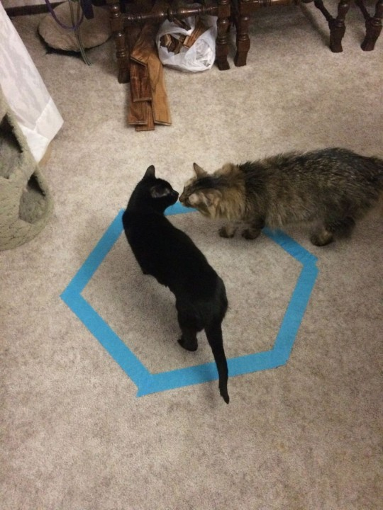 Chase_Gizmo_Cat_Circles