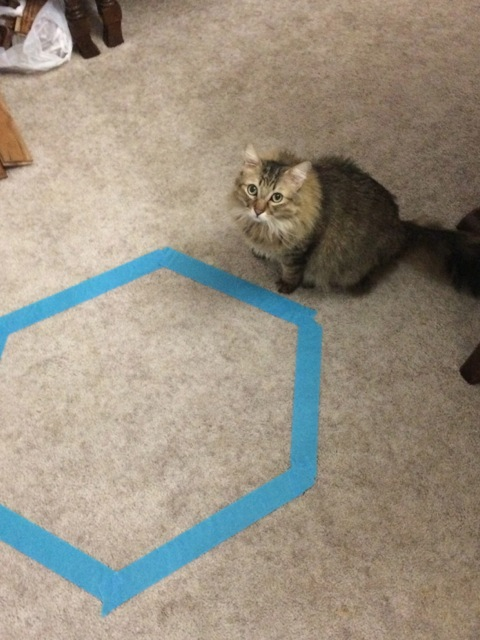 Chase_Tape_Cat_Circles