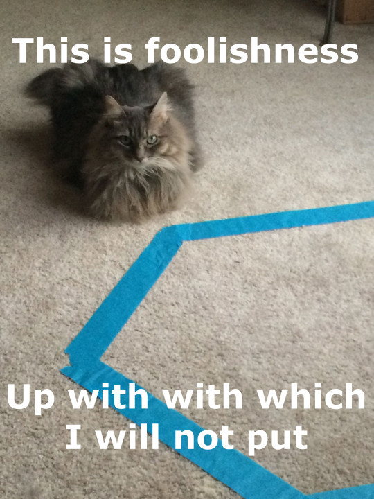 Kali_Foolishness_Cat_Circles