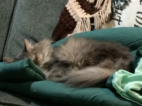 Kali_Obscenely_Comfy_Cats_Dream
