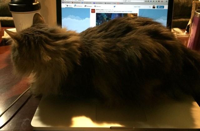 Kali on my computer, on my desk.