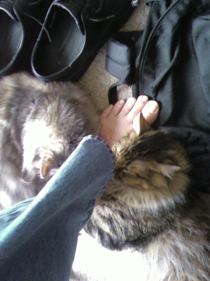 Chase_Aria_Cats_Love_Socks_And_Shoes