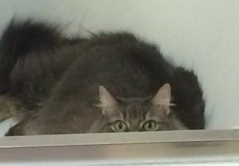 Kali Bathtub Indoor-Only Cat's Happiness