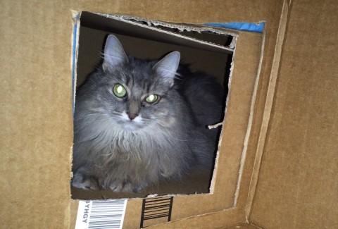 Kali_Cat_Houses