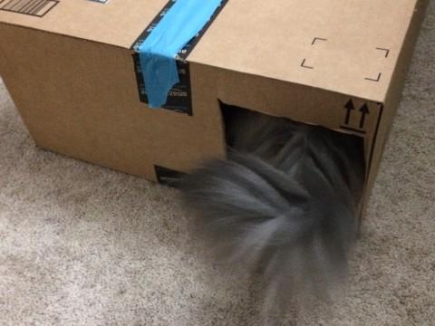 Kali_Tail_Cat_Houses