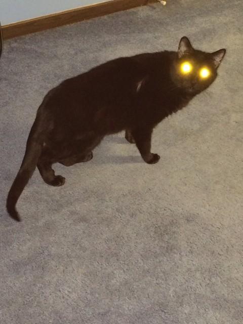 Gizmo_Laser_Eyes