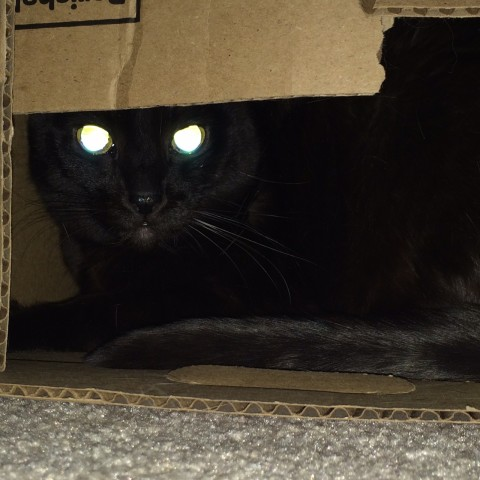 Gizmo_Weaponized_Box_Cats'_Eyes_Glow