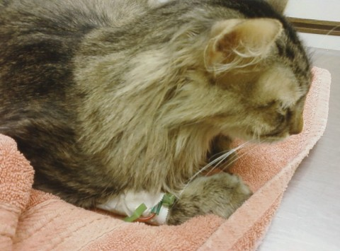 Chase_Hospital_Free_Feed_Cats