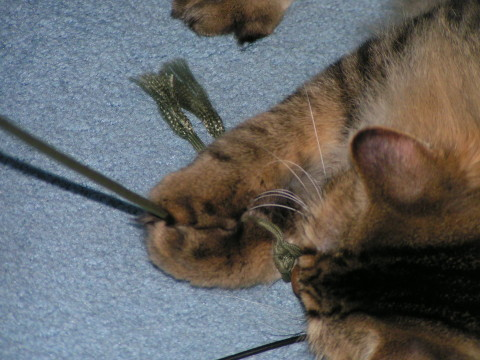 Chase_and_String_Play_With_Cats