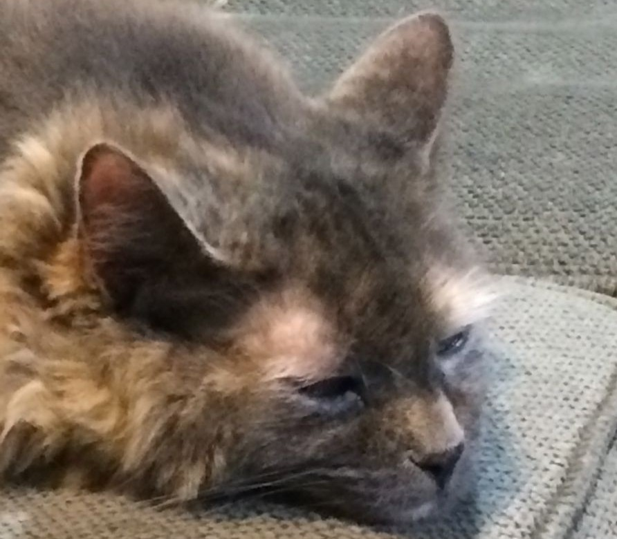 Aria_Tired_Cats_Feel_Emotion