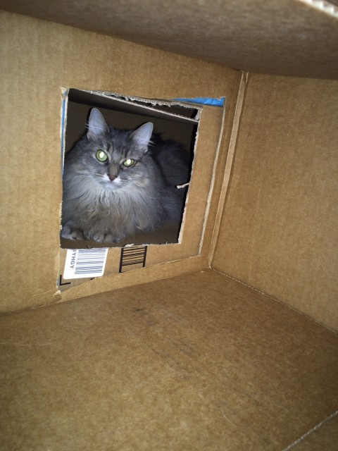 Kali Giving Shelter Cats Boxes