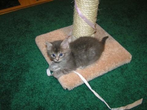 Kali_Adopt_A_Cat_or_A_kitten
