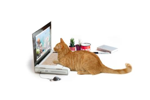Cat_Scratch_Laptop