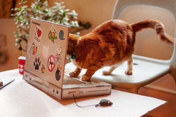 Cat_Scratch_Laptop_2