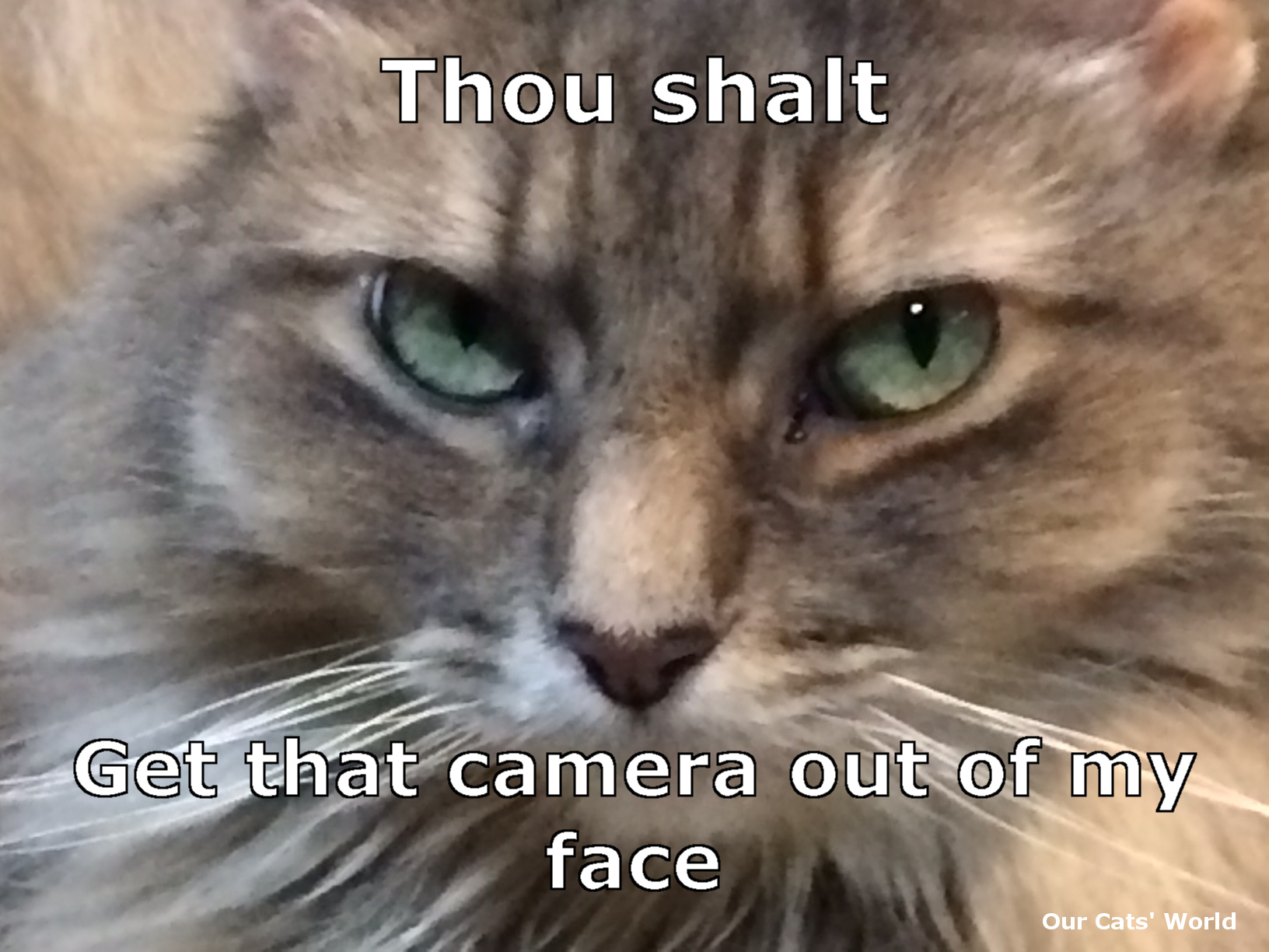 Kali_Cattitude_Feline_Commandment