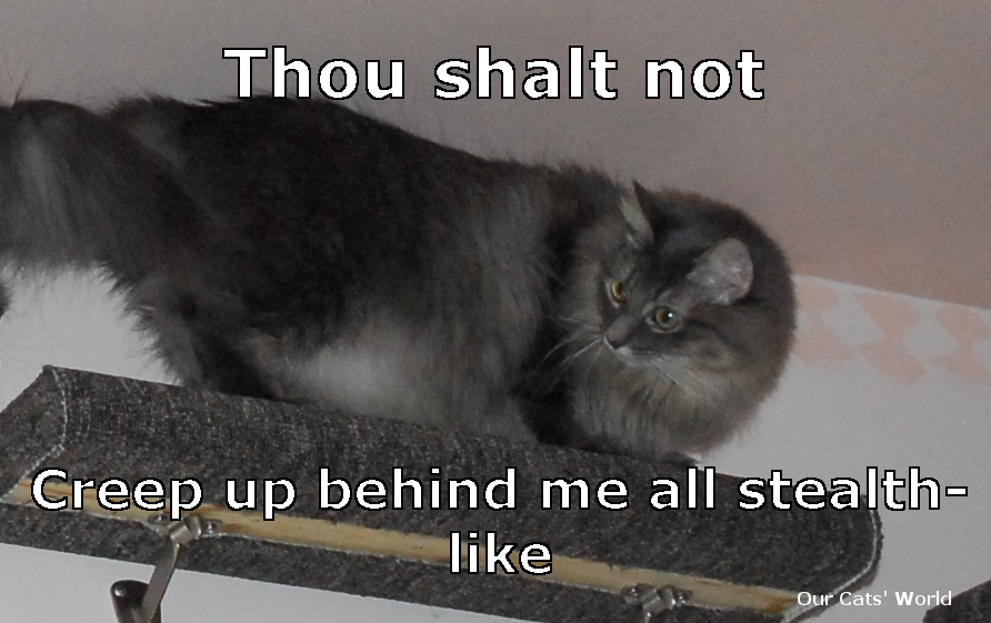 Kali_Stealth_Feline_Commandments