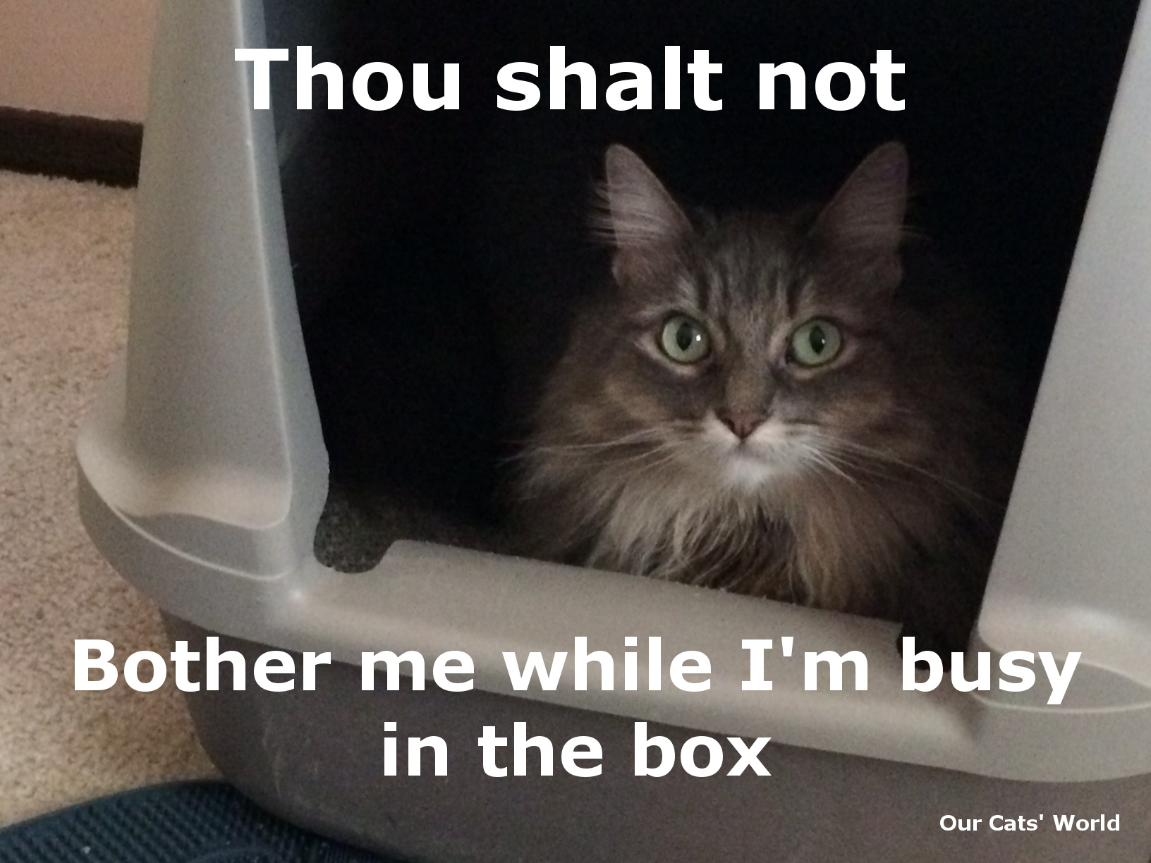 Kali_What_Litter_Box_Feline_Commandment