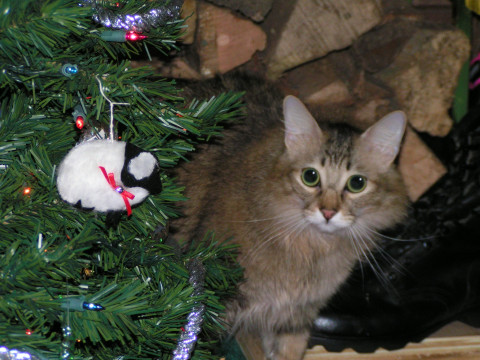 Chase Christmas Cats At Christmas