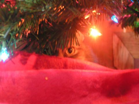 Kali Christmas Tree Cat-Safe Christmas
