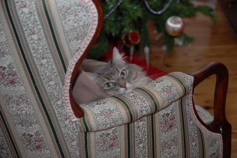 Kali Cuteness Cat-Safe Christmas