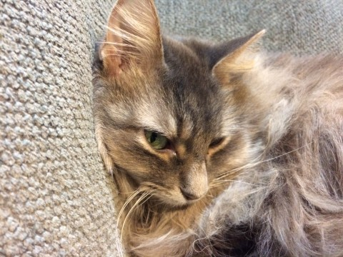 Kali Smoking Harms Cats