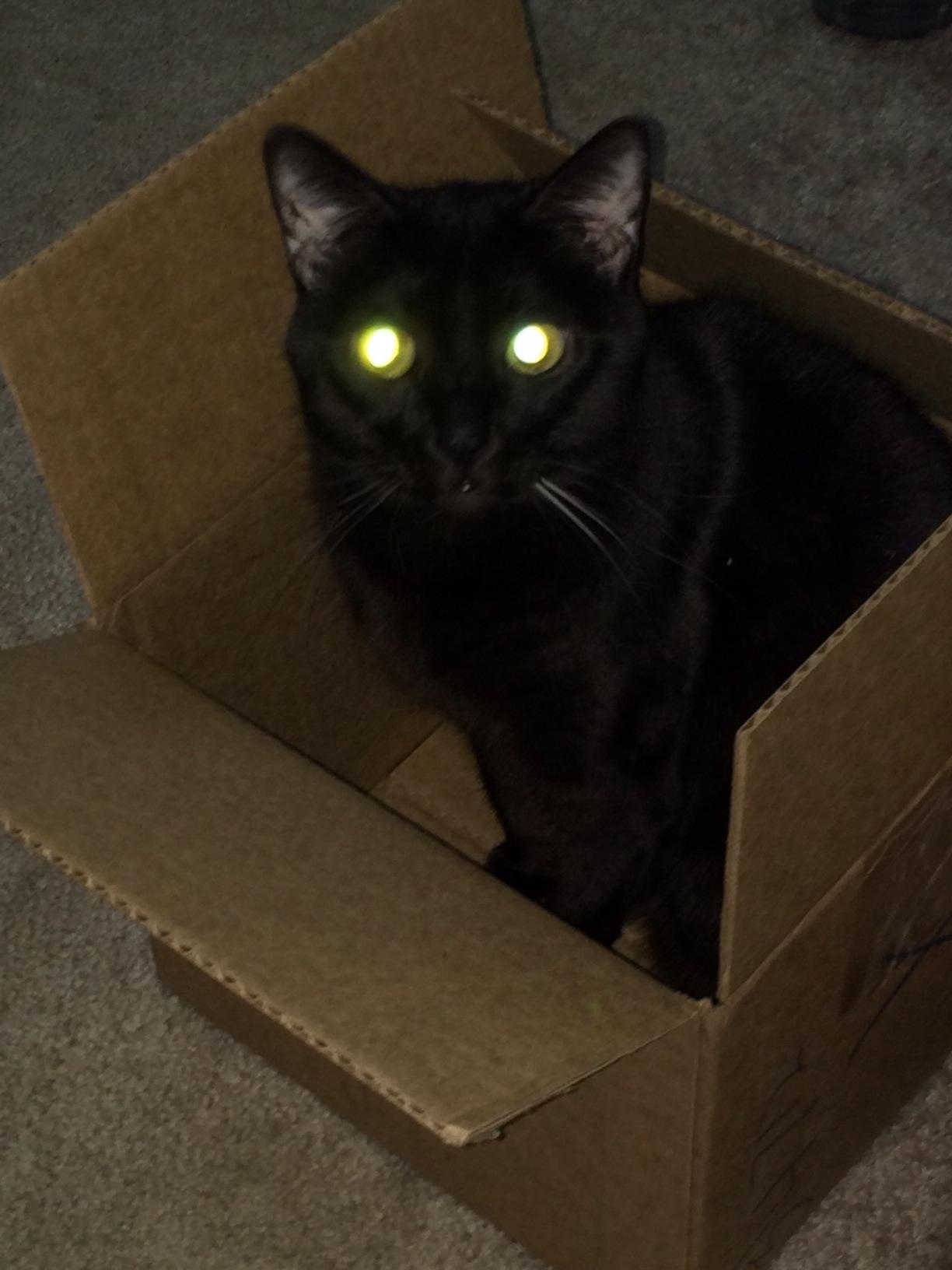 Gizmo Dark Box 1 cats in boxes
