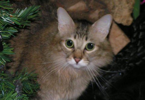 Chase Hunger Feline Genome