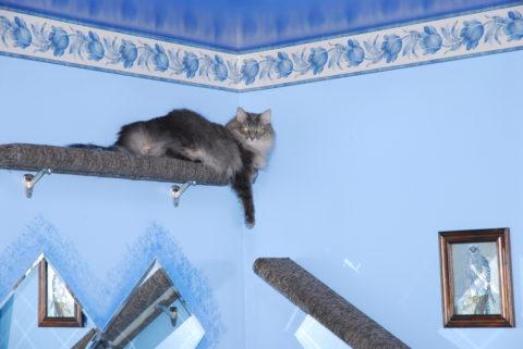 Kali Shelf Cat Furniture